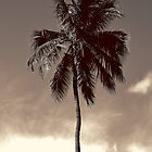 South Beach Palm by Jaymes Williams