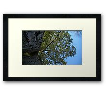 Windy Day - The Blue & The Green 026 Framed Print