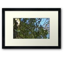 Windy Day - The Blue & The Green 028 Framed Print
