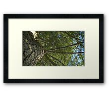 Windy Day - The Blue & The Green 029 Framed Print