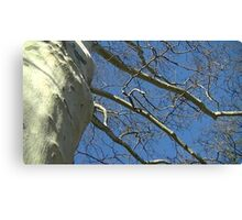 Windy Day - The Blue & The Green 033 Canvas Print