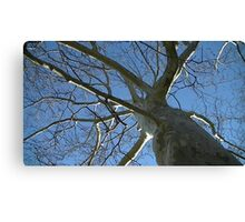 Windy Day - The Blue & The Green 035 Canvas Print