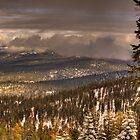 Winter in the Sierra Nevada Foothills by Paul J. Owen