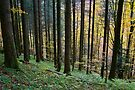 Autumn landscape in Valserine forest by Patrick Morand