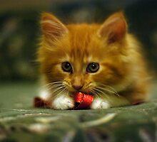 Valletta the kitty 3 by narabia