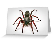 White Tail Spider Greeting Card