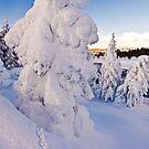 Ghost Tree by Gary Lengyel