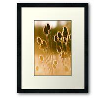 Sunlit Teasel Framed Print