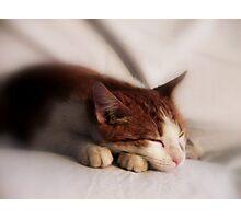 Resting Fella Photographic Print