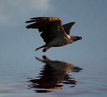 """Sea Eagle on Patrol"" by Sue  Fellows"