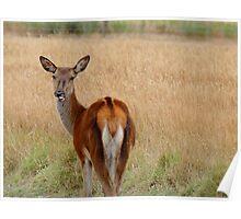 Doe A Deer - NZ Poster