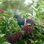 I Prefer The Elder Berries - Wood Pigeon - NZ by AndreaEL