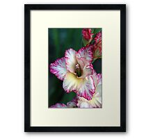 Flower of the Gladiators Framed Print