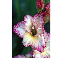 Flower of the Gladiators Photographic Print