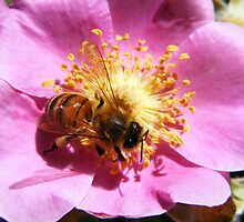 Bee and Wild Rose by Leslie Robinson