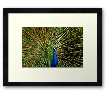 Peacock Eyes Framed Print