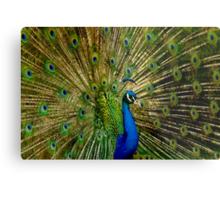 Peacock Eyes Metal Print