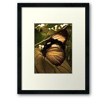 Golden Wing Framed Print