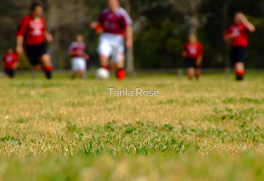 Tough Grass by Tania Rose