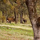 Two Stags by flyfish70