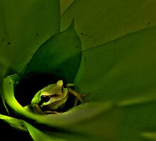 Froghopper! 1 by TracyD