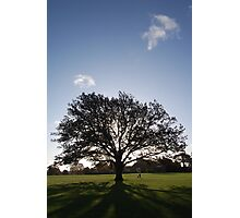 tree and shadow Photographic Print