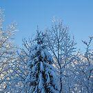 View of Winter by Lynn Gedeon