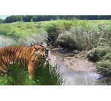 1096-Bengal Swamp Hole Photographic Print