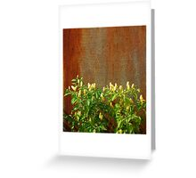 Chilli Plants Against Rusted Metal Door  Greeting Card