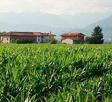 Corn Field and Farm by jojobob
