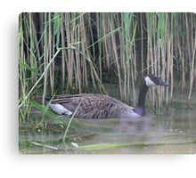 Canada Goose kids sale 2016 - Canada Goose: Metal Prints | Redbubble