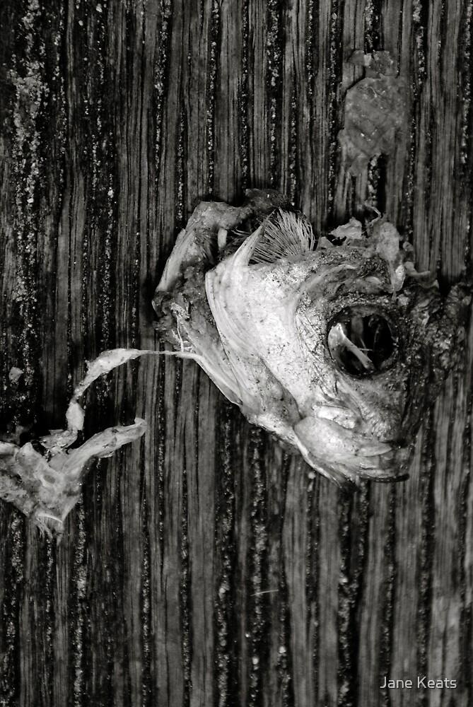 My Fish Eye by Jane Keats