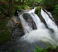 Foote Brook, Upper Falls, Summer by Stephen Beattie