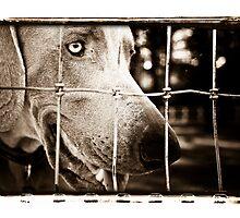 At The Gate by lorispradley