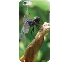 Beautiful Dragonfly iPhone Case/Skin