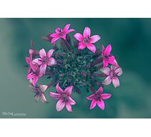Pink Flowers Explosion Photographic Print
