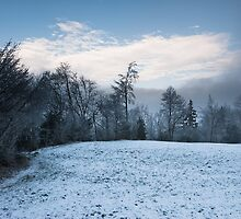 winter forest panorama by peterwey
