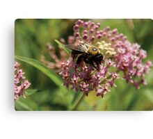 Whoa lil Bumble Bee Canvas Print