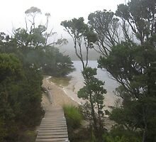 Stairs to beach at Dove Lake, Cradle Mountain, Tasmania by Marilyn Baldey