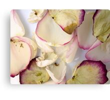 Rose Petals 3 Canvas Print