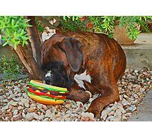 Mine! -Boxer Dogs Series- Photographic Print