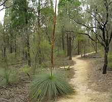 Lee's Pinch Walking Track by CapturedByKylie