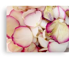 Rose Petals 8 Canvas Print