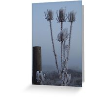 Teasel in the freezing fog Greeting Card