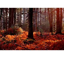 The New Forest Photographic Print