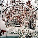 Winter Solace by tkrosevear