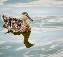 Duck by Zach  Schible