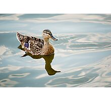 Duck Photographic Print