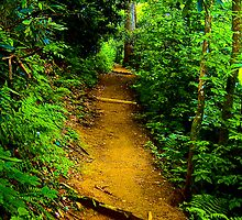 Well Worn Path by Lisa Taylor