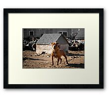 Junk Yard Dog Framed Print